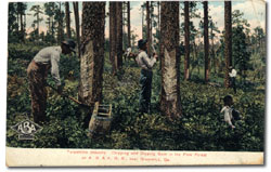 Okefenokee turpetine camp